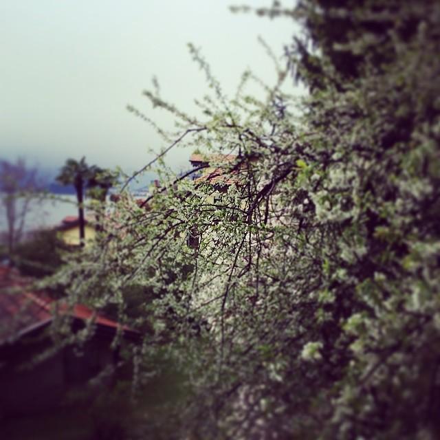 Primavera su lago